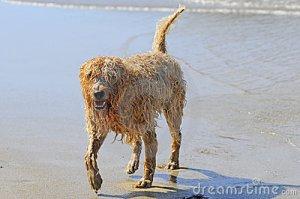 wet-dog-6005581